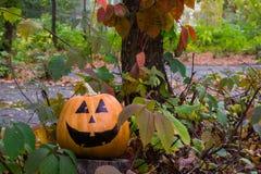 Grappige aardige Halloween-Pompoen op het gras Stock Fotografie