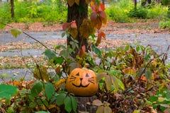 Grappige aardige Halloween-pompoenkat in de tuin Stock Fotografie