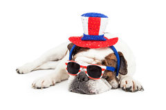 Grappige Amerikaanse Vakantiebuldog Royalty-vrije Stock Afbeelding