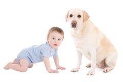 Grappige babyjongen en mooi hondgolden retriever die isolat zitten Stock Fotografie