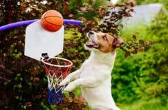 Grappige basketbalspeler die bal boven hoepel vangen Stock Foto
