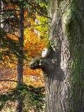 Grappige boskwelgeestboom Royalty-vrije Stock Foto