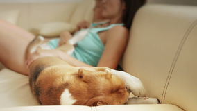 Grappige Brakhond die ochtendwas op sofe doen waar moeder en zoon die op TV letten stock footage