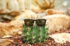 Grappige cactus met zonnebril bij de tuin Stock Afbeelding