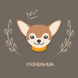 Grappige chihuahua vectorillustratie Leuk beeldverhaalportret van een hond Royalty-vrije Stock Foto's