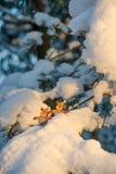 Grappige cijfers van herten op sneeuwpijnboomtakken Royalty-vrije Stock Afbeeldingen
