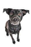 Grappige close-up van een leuke straathond die op een traktatie wacht stock foto's