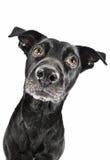 Grappige close-up van een leuke straathond die op een traktatie wacht royalty-vrije stock afbeelding
