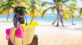 Grappige de zomer zwarte hond met de zomertoebehoren Royalty-vrije Stock Afbeelding