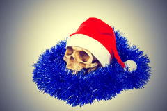 Grappige die schedel in hoed Santa Claus op witte achtergrond wordt geïsoleerd Stock Foto