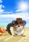Grappige dierlijke aardeekhoorn met zonnebril op zandig strand Stock Afbeeldingen