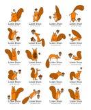 Grappige eekhoorn met noot, inzameling voor uw ontwerp Stock Fotografie