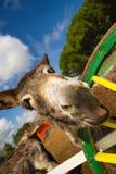 Grappige ezel die wat zeggen tot me is stock foto