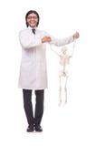 Grappige geïsoleerde leraar met skelet Royalty-vrije Stock Afbeelding