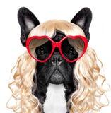 Grappige gekke dwaze Carnaval-hond royalty-vrije stock afbeelding