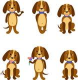 Grappige geplaatste honden Royalty-vrije Stock Foto