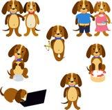 Grappige geplaatste honden Stock Afbeelding