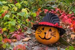 Grappige Halloween-pompoenkat in hoed Stock Foto