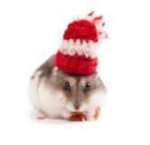 Grappige hamster Stock Afbeeldingen
