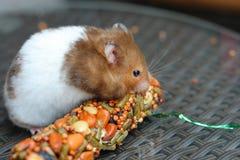 Grappige hamster die voedsel eten Stock Foto