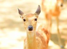 grappige herten stock foto's