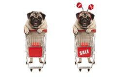 Grappige het glimlachen het winkelen pug puppyhond die zich achter rood getelegrafeerd metaalboodschappenwagentje bevinden met ve stock foto's