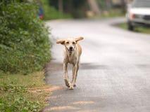 Grappige hond Royalty-vrije Stock Afbeeldingen