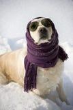 Grappige hond Royalty-vrije Stock Fotografie