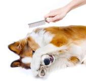 Grappige Hond Royalty-vrije Stock Foto's
