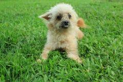 Grappige Hond royalty-vrije stock foto