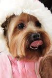 Grappige hond Royalty-vrije Stock Afbeelding