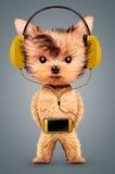 Grappige hond die aan muziek op hoofdtelefoons luisteren Stock Foto's