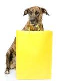 Grappige hond met het winkelen zak Geïsoleerdj op witte achtergrond royalty-vrije stock fotografie