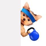 Grappige hond opleiding met kettlebell achter banner Stock Foto