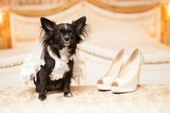 Grappige hond van de bruid in een witte huwelijkskleding Royalty-vrije Stock Foto