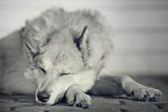 Grappige hond vuile slaap vreedzaam Royalty-vrije Stock Afbeeldingen
