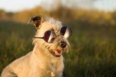 Grappige hond in zonnebril die op park stellen royalty-vrije stock afbeeldingen