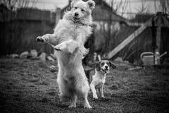 Grappige honden Stock Foto