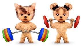 Grappige honden die met barbells in sportgymnastiek opleiden Stock Foto
