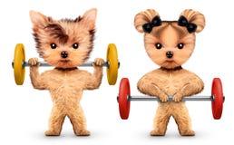 Grappige honden die met barbells in sportgymnastiek opleiden Royalty-vrije Stock Afbeeldingen