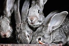 Grappige huisdierenkonijnen in een kooi op het landbouwbedrijf Stock Foto's