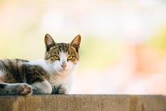 Grappige Jonge Cat Resting In Shade On een Hete de Zomerdag in openlucht stock afbeeldingen
