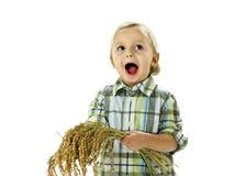 Grappige jongen met rijstinstallaties Royalty-vrije Stock Foto's