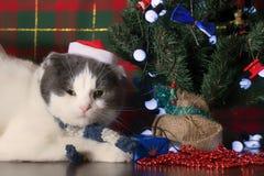 Grappige kat in Santa Claus GLB die onder de Nieuwjaarboom liggen stock foto