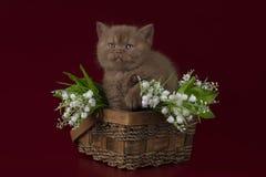 Grappige katje en bloemen Royalty-vrije Stock Foto's