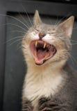 Grappige kattengeeuwen stock afbeeldingen