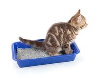 Grappige kattenpipi in geïsoleerde de doos van het toiletdienblad royalty-vrije stock fotografie