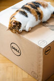 Grappige kattenslaap op DELL-computerdoos Royalty-vrije Stock Afbeeldingen