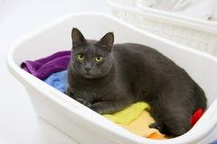 Grappige kattenwas - kat in mand met wasserij Royalty-vrije Stock Afbeeldingen