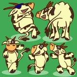 Grappige Koeien Royalty-vrije Stock Afbeelding